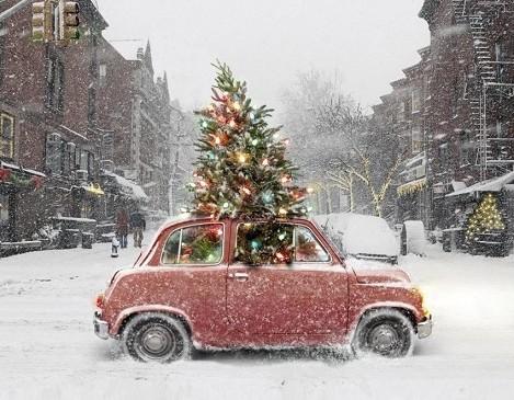 L' Albero di Natale che non ti aspetti